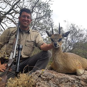 Hunt Klipspringer in Zimbabwe