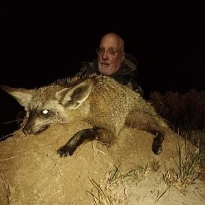 Hunting Bat-eared Fox in South Africa