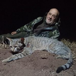 South Africa Hunt African Wild Cat