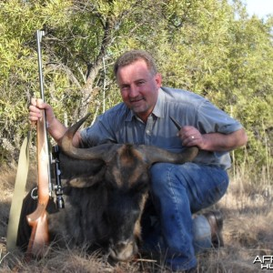 Hunting Blue Wildebeest South Africa