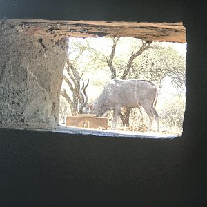 View of Kudu from the Bow Blind Hide