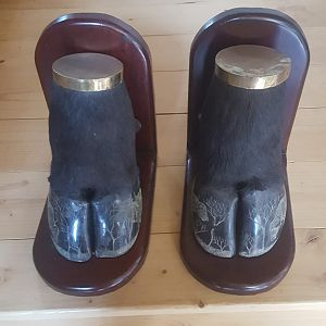 Cape Buffalo Feet Shelf Book Holders Taxidermy