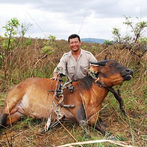 Congo Bow Hunting African Forest Buffalo