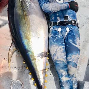 Yellowfin Tuna Spearfishing Panamá