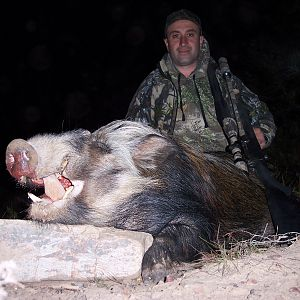 Hunt Bushpig in South Africa