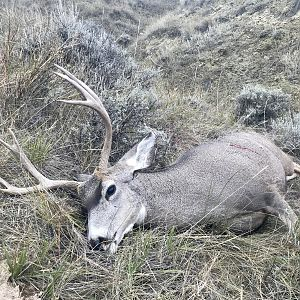Hunt Mule Deer in Wyoming USA