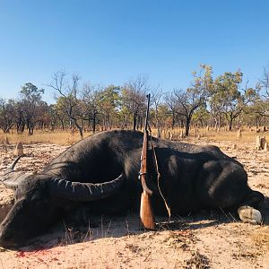 Australia Hunting Asiatic Water Buffalo