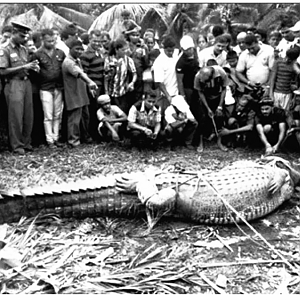 Crocodile Hunting India