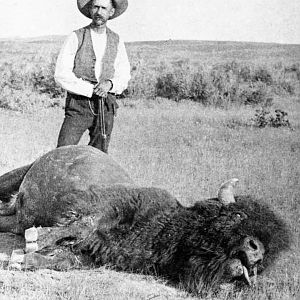 Buffalo hunt in Montana