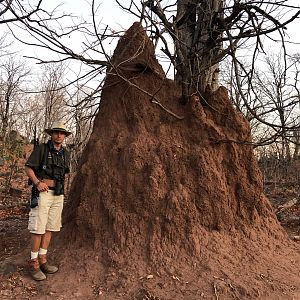 Ant Hill in Zimbabwe