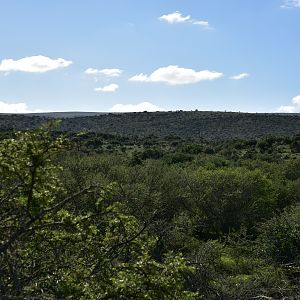 Hunting Area South Africa