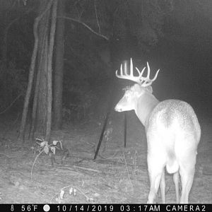 Trail Cam Pictures White-tailed Deer