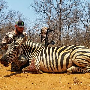 "Plains Zebra ""Equus Quagga"" Bowhunting South Africa"
