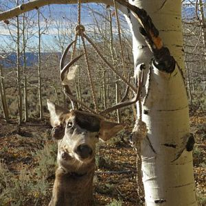 USA Hunt Mule Deer