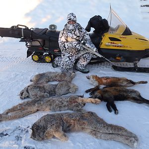 Bobcat, Fox & Wolf Hunting