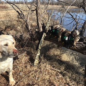 Hunting Ducks in USA