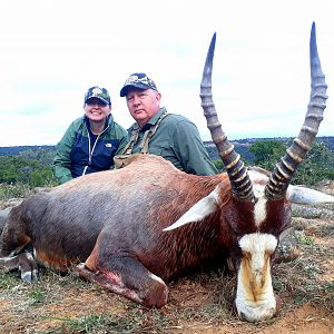 South Africa Hunting Blesbok