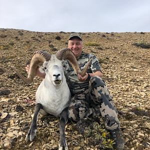 "40"" Inch Stone Sheep Hunt Canada"
