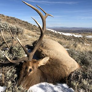 USA Hunt Elk