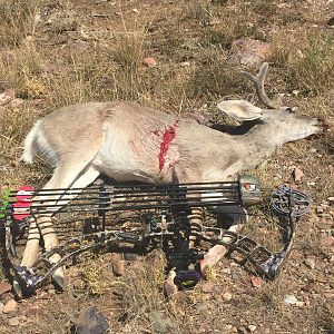 Bow Hunt Coues Deer