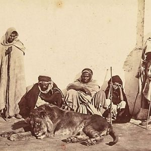 Barbary Lions Hunt Morocco