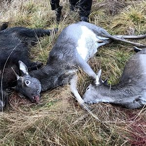 Sweden Driven Hunt Boar & Deer