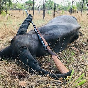 Hunt Asiatic Water Buffalo in Australia