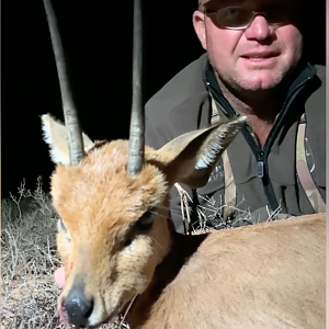 Steenbok 6.5+ inches
