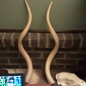 Kudu Horns Taxidermy