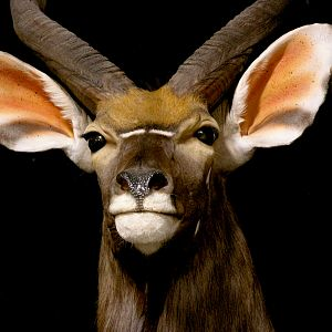 Nyala, Impala & Red Hartebeest Triple Pedestal Mount Taxidermy Mount