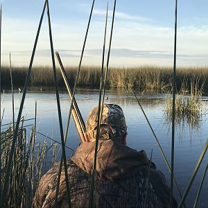 Hunt Duck in Argentina