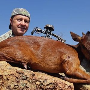 South Africa Bow Hunting Red Duiker