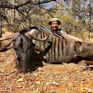 Blue Wildebeest Hunt South Africa