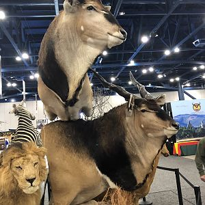 Eland Double Pedestal Mount Taxidermy