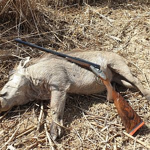 South Africa Cull Hunting Warthog