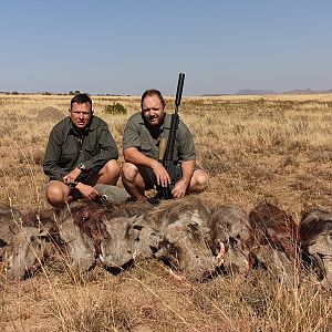 Warthog Cull Hunting South Africa