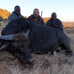 Hunting Non-exportable Buffalo Cow
