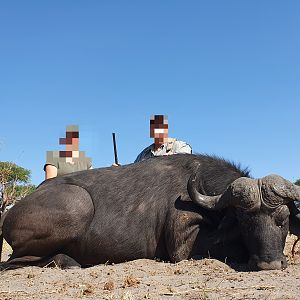 Non-exportable Hunting Buffalo