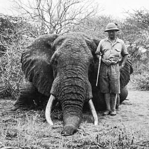 African Savannah Elephant Hunt