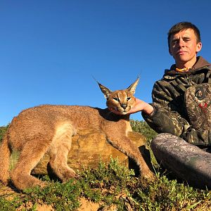 Hunt Caracal in South Africa