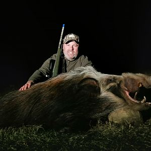 Bushpig Hunting South Africa