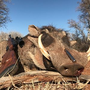 Hunt Warthog in South Africa