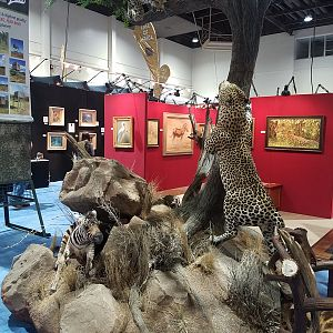 Leopard Full Mount Taxidermy at Safari Club International (SCI) Convention Reno 2020