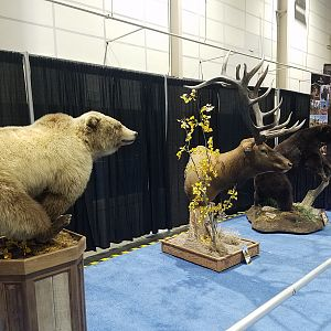 Bear & Elk Pedestal Mounts Taxidermy at Safari Club International (SCI) Convention Reno 2020