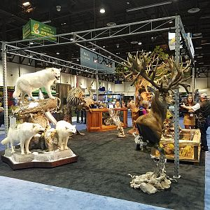 Wolves  Full Mount & Red Stag Pedestal Mount Taxidermy at Safari Club International (SCI) Convention Reno 2020
