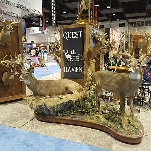White-tailed Deer Full Mount Taxidermy at Safari Club International (SCI) Convention Reno 2020