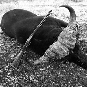 South Africa Hunt Buffalo