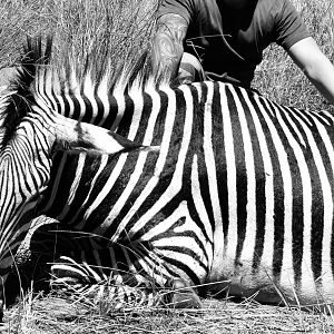 Hunting Hartmann Mountain Zebra in Namibia