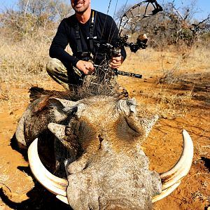 Warthog Bow Hunting South Africa