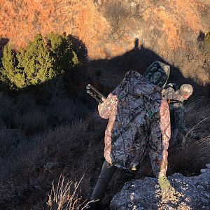 Hunting Aoudad in Texas USA